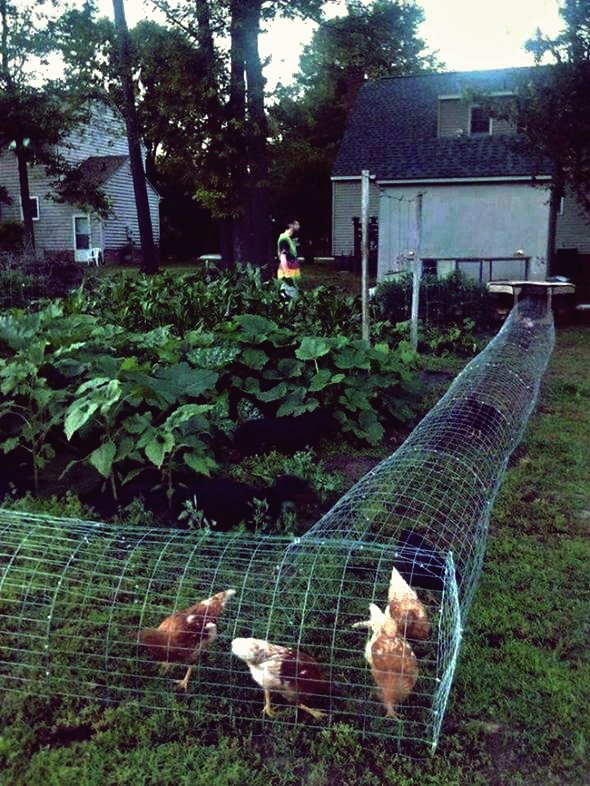 Kreative Ideen - DIY Backyard Chicken Tunnel